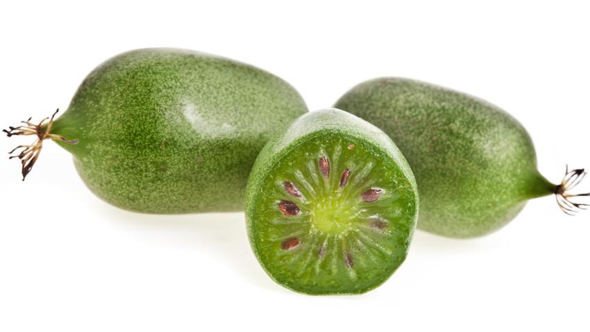 Kiwi mini